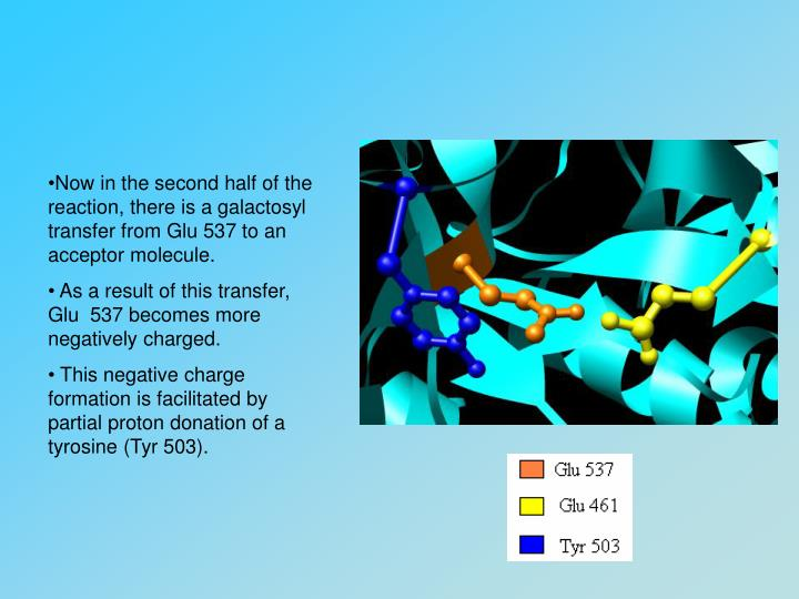 Now in the second half of the reaction, there is a galactosyl transfer from Glu 537 to an acceptor molecule.