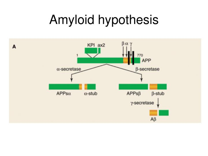 Amyloid hypothesis