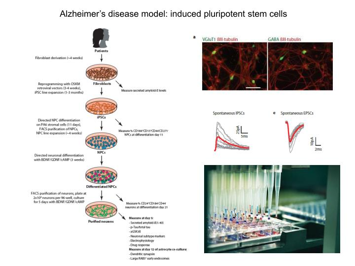 Alzheimer's disease model: induced pluripotent stem cells