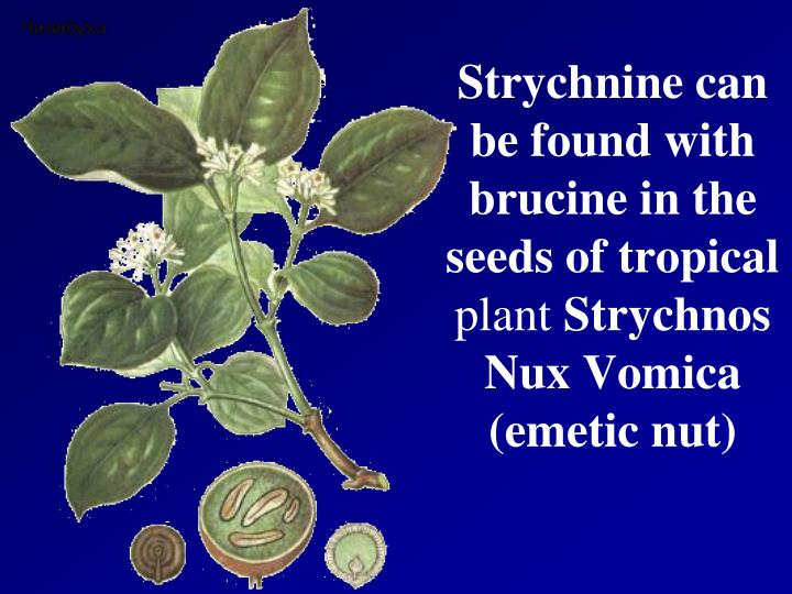 Strychnine can be found with brucine in the seeds of tropical