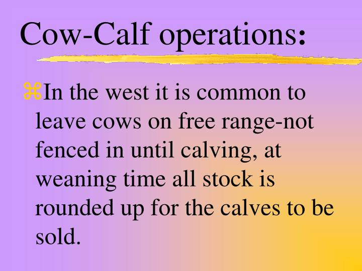 Cow-Calf operations