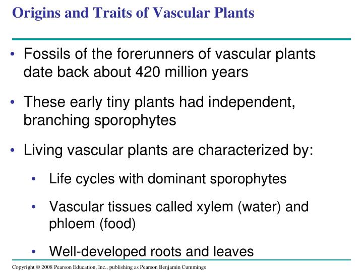 Origins and Traits of Vascular Plants