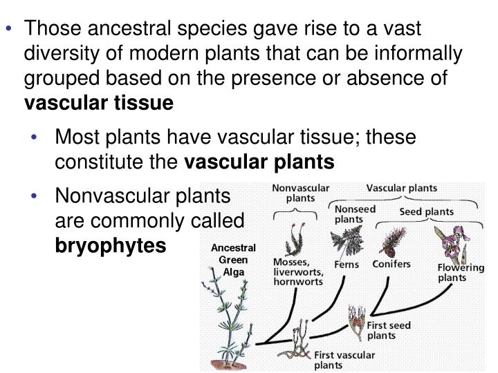Those ancestral species gave rise to a vast diversity of modern plants that can be informally grouped based on the presence or absence of