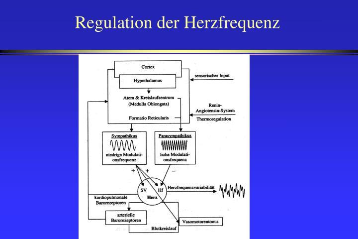 Regulation der herzfrequenz