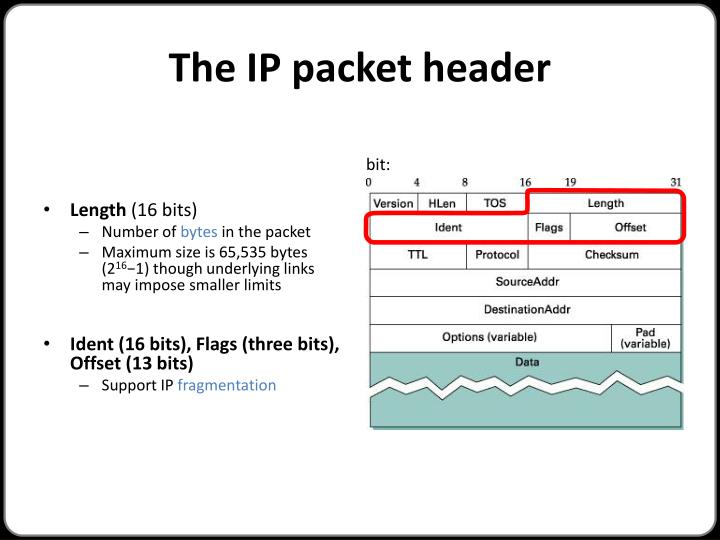 The IP packet header
