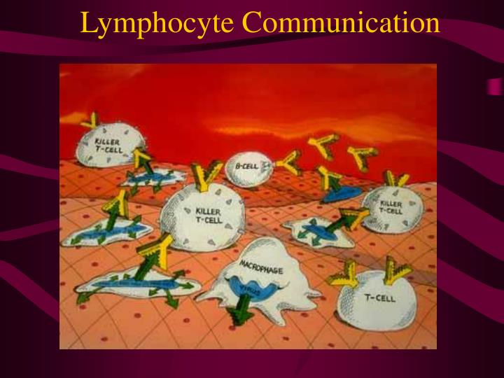 Lymphocyte Communication