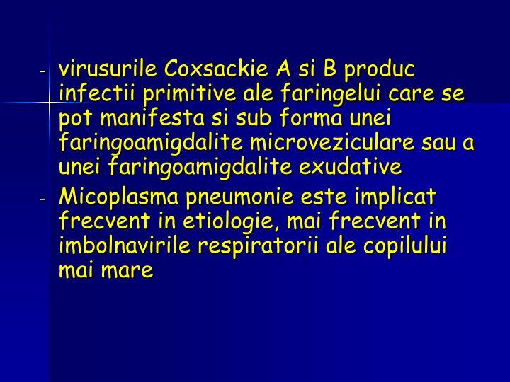 virusurile Coxsackie A si B produc infectii primitive ale faringelui care se pot manifesta si sub forma unei faringoamigdalite microveziculare sau a unei faringoamigdalite exudative