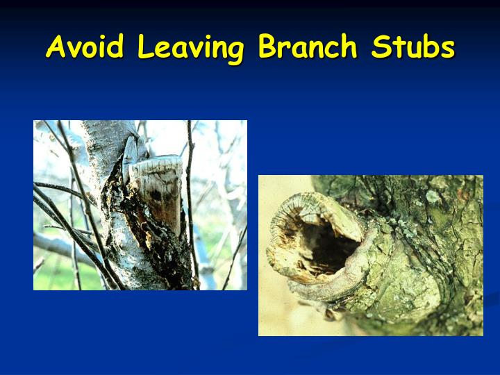 Avoid Leaving Branch Stubs