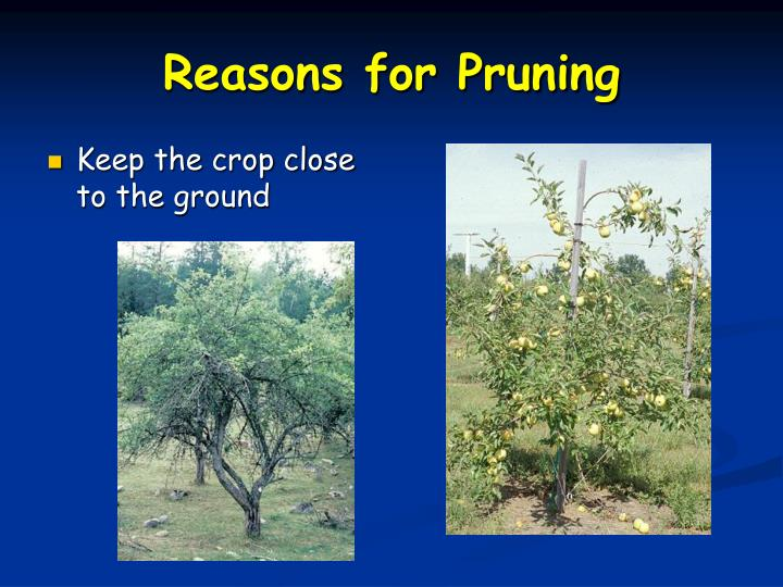 Reasons for Pruning