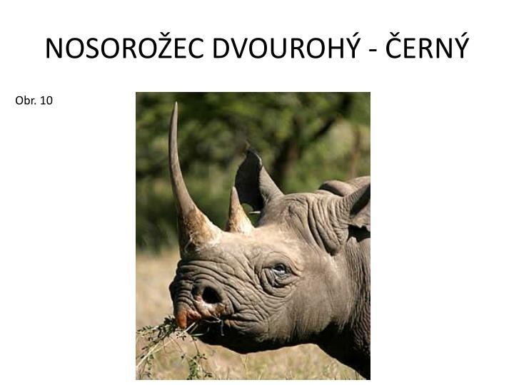 NOSOROŽEC DVOUROHÝ - ČERNÝ