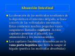 absorci n intestinal