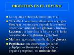 digestion en el yeyuno