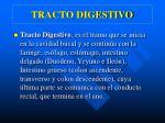 tracto digestivo