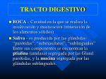 tracto digestivo1