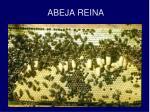 abeja reina1