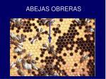 abejas obreras3