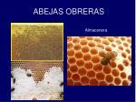 abejas obreras8
