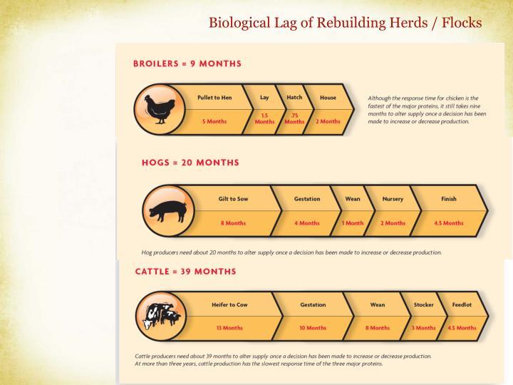 Biological Lag of Rebuilding Herds / Flocks