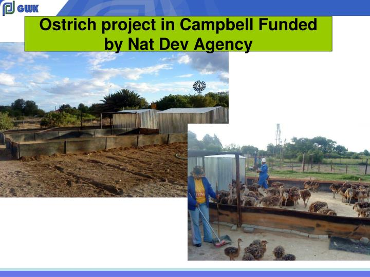 Ostrich project in Campbell Funded by Nat Dev Agency