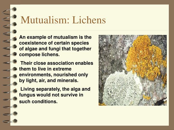 Mutualism: Lichens