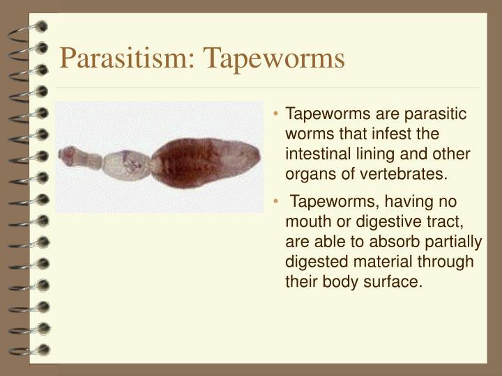 Parasitism: Tapeworms