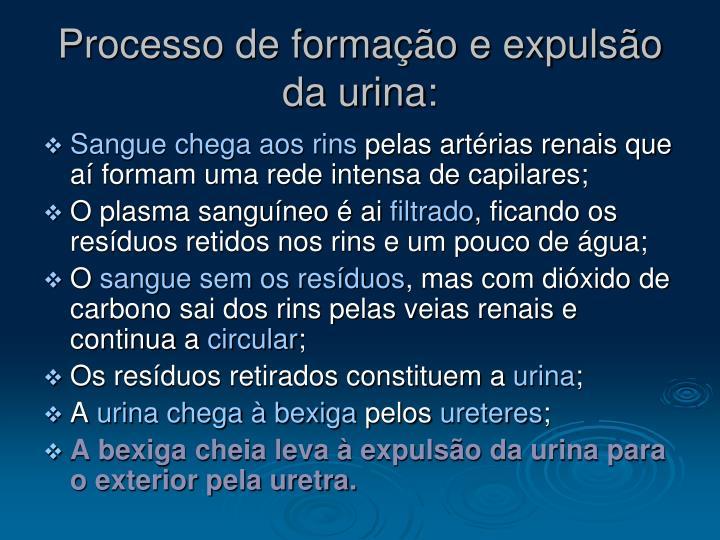 Processo de formação e expulsão da urina: