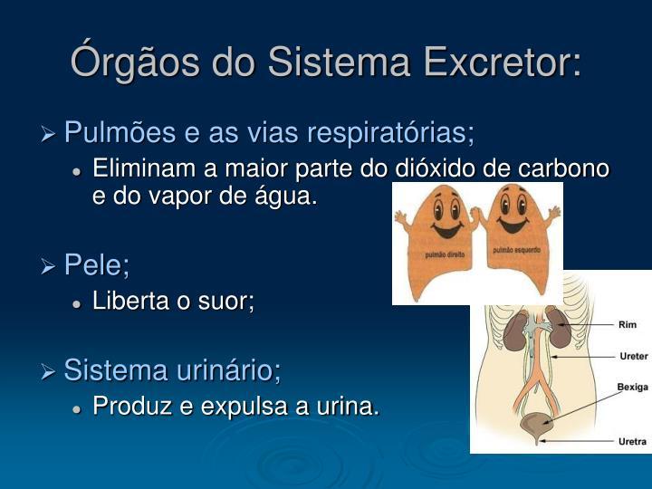 Rg os do sistema excretor