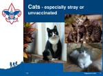 cats especially stray or unvaccinated