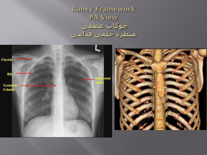 Boney Framework