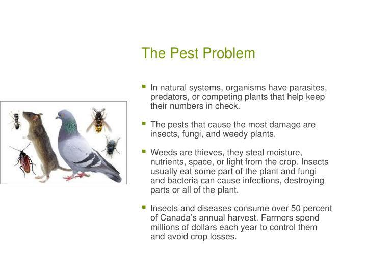 The pest problem