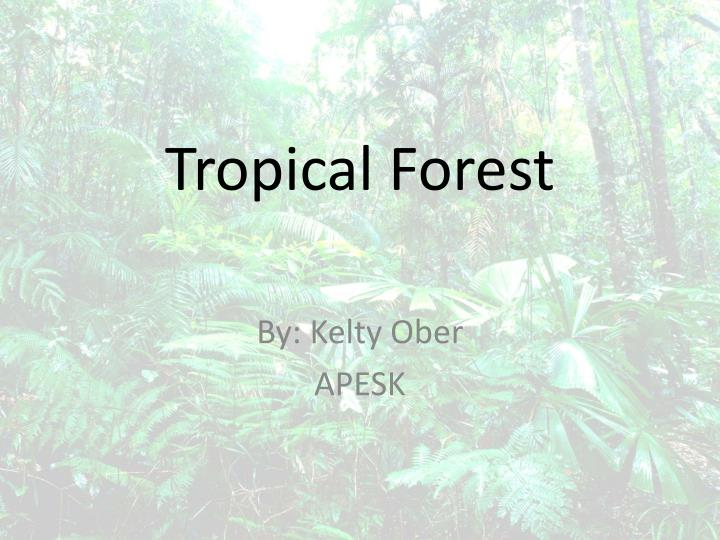 tropical forest n.