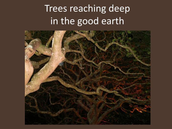 Trees reaching deep
