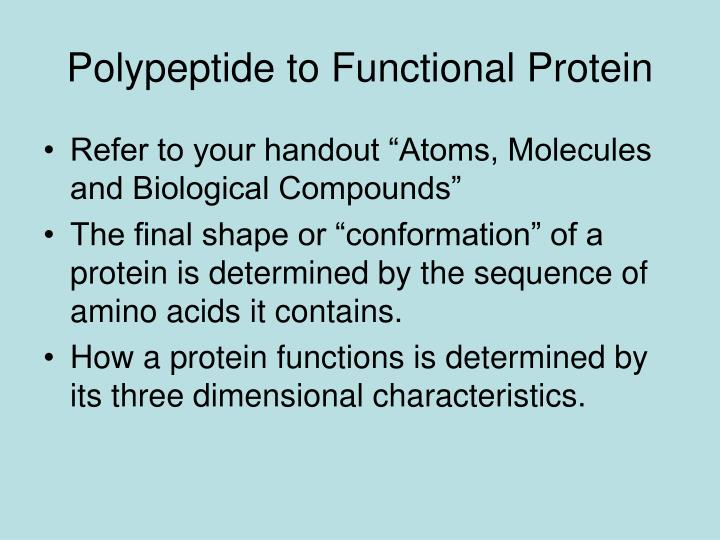 Polypeptide to Functional Protein