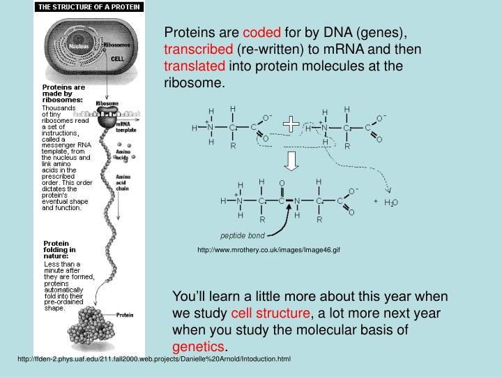 Proteins are