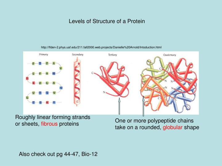 Levels of Structure of a Protein