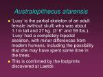 australopithecus afarensis1