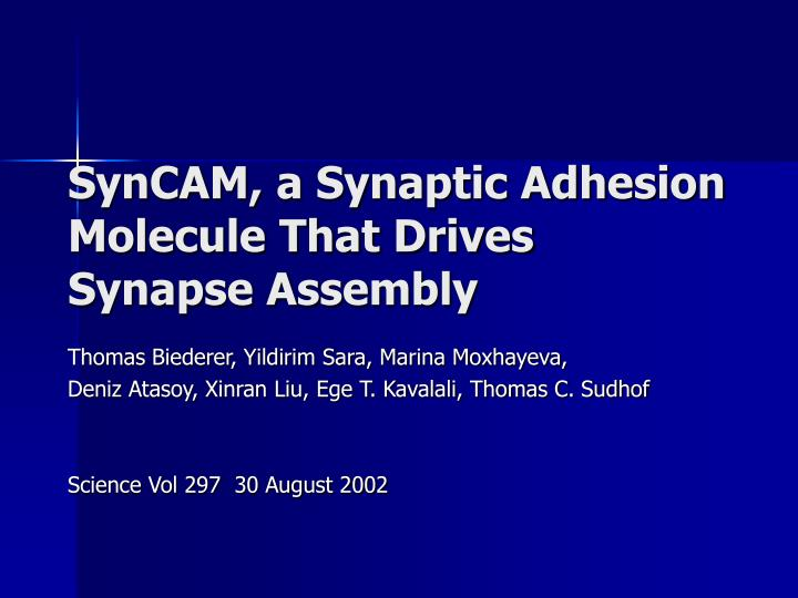 syncam a synaptic adhesion molecule that drives synapse assembly n.