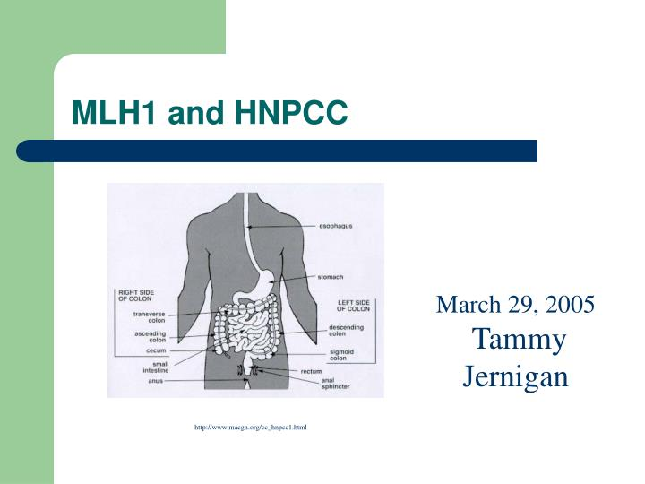 mlh1 and hnpcc n.