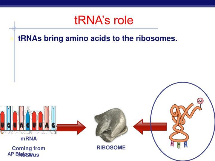 tRNA's role