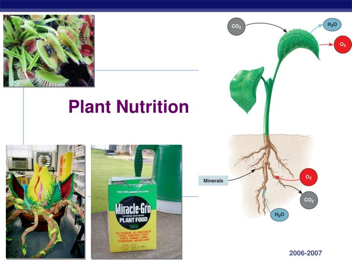 nutrition in plants mineral nutrition What is plant nutrition plants use inorganic minerals for nutrition, whether grown in the field or in a container complex interactions involving weathering of rock minerals, decaying organic matter, animals, and microbes take place to form inorganic minerals in soil.