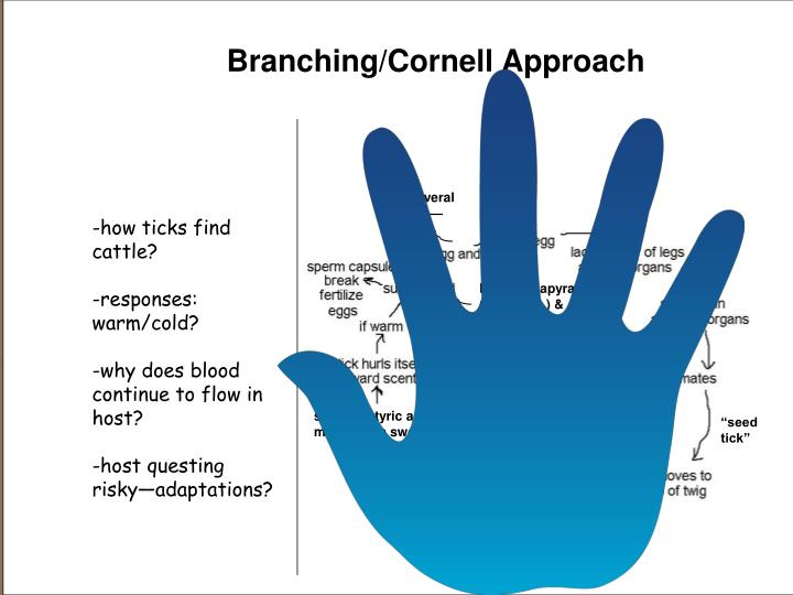 Branching/Cornell Approach