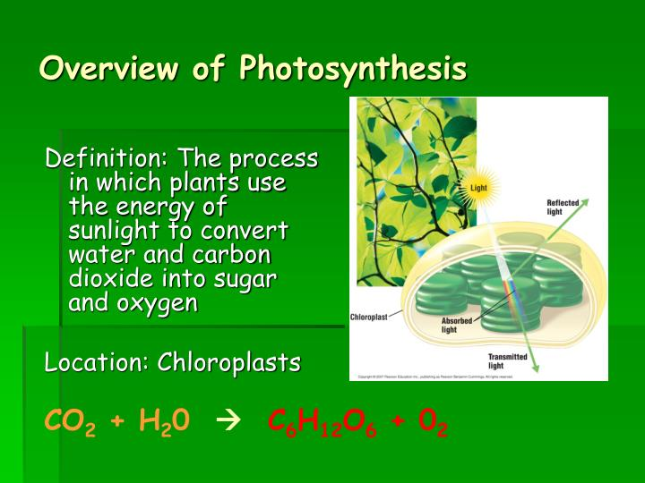 PPT - Chapter 8 8.1 How Organisms Obtain Energy 8.2 ...