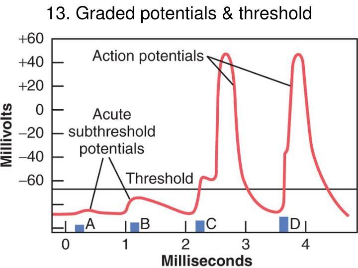 13. Graded potentials & threshold