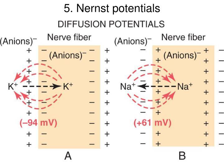 5. Nernst potentials