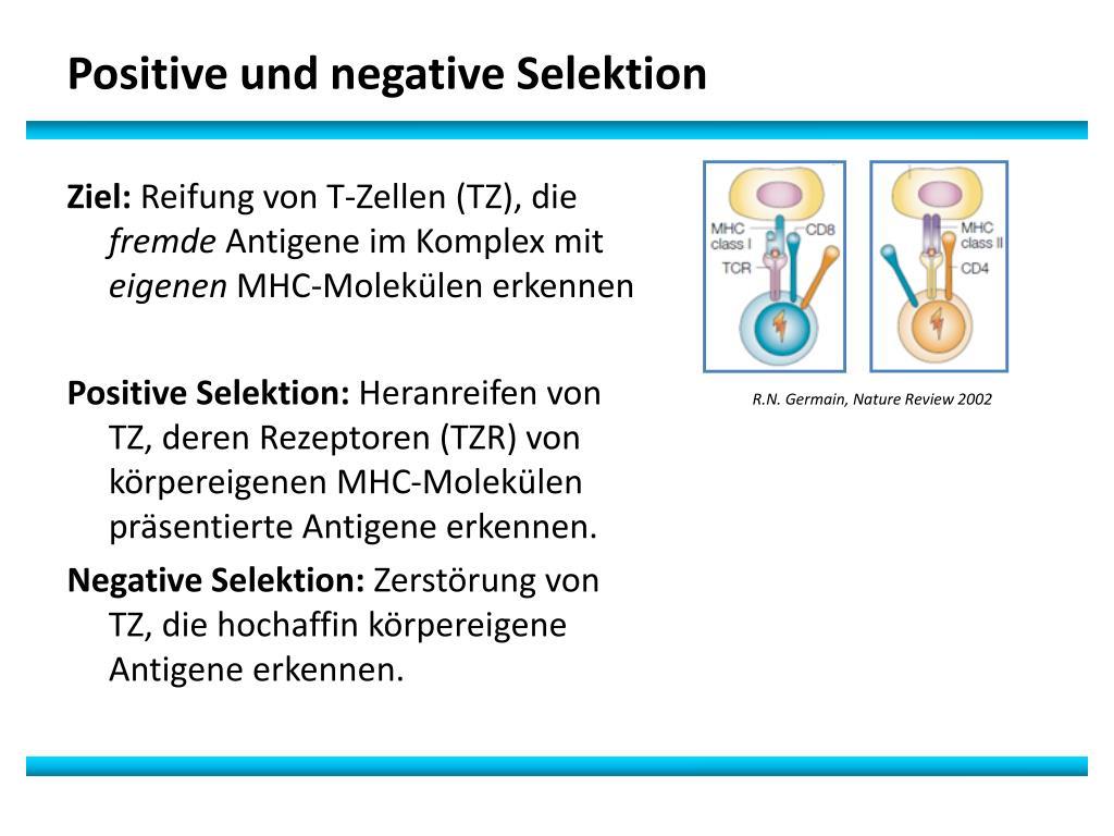 Negative Selektion