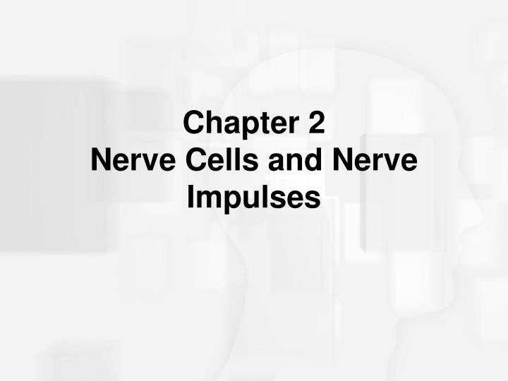 chapter 2 nerve cells and nerve impulses n.