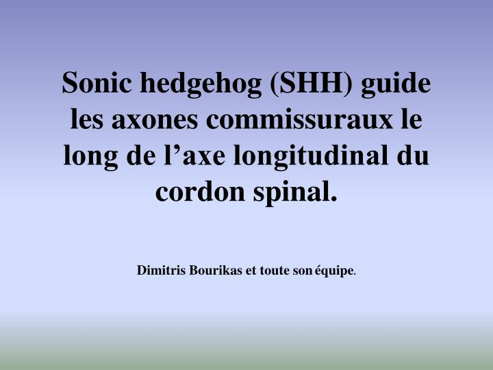Sonic hedgehog shh guide les axones commissuraux le long de l axe longitudinal du cordon spinal