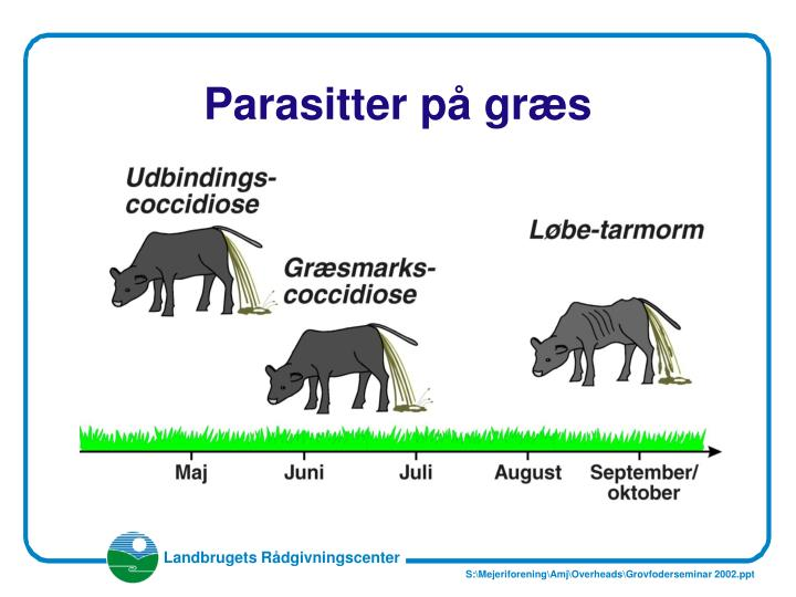 Parasitter p gr s