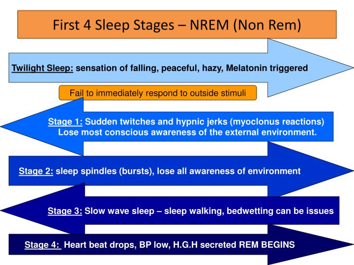 First 4 Sleep Stages – NREM (Non Rem)