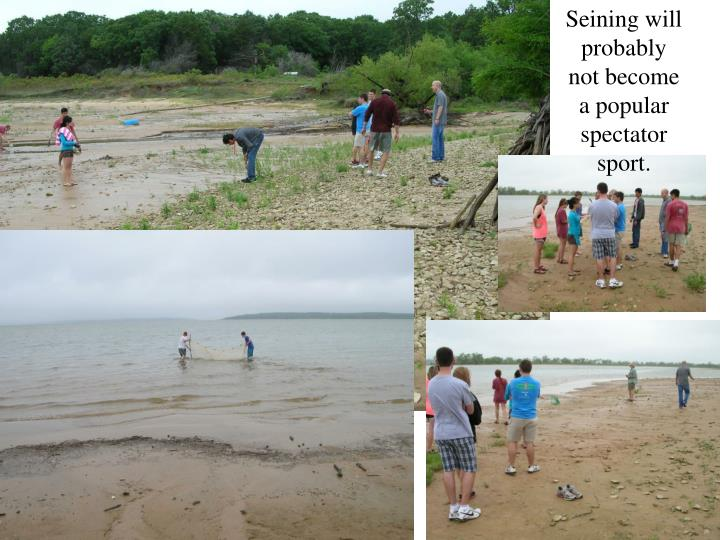 Seining will probably not become a popular spectator sport.
